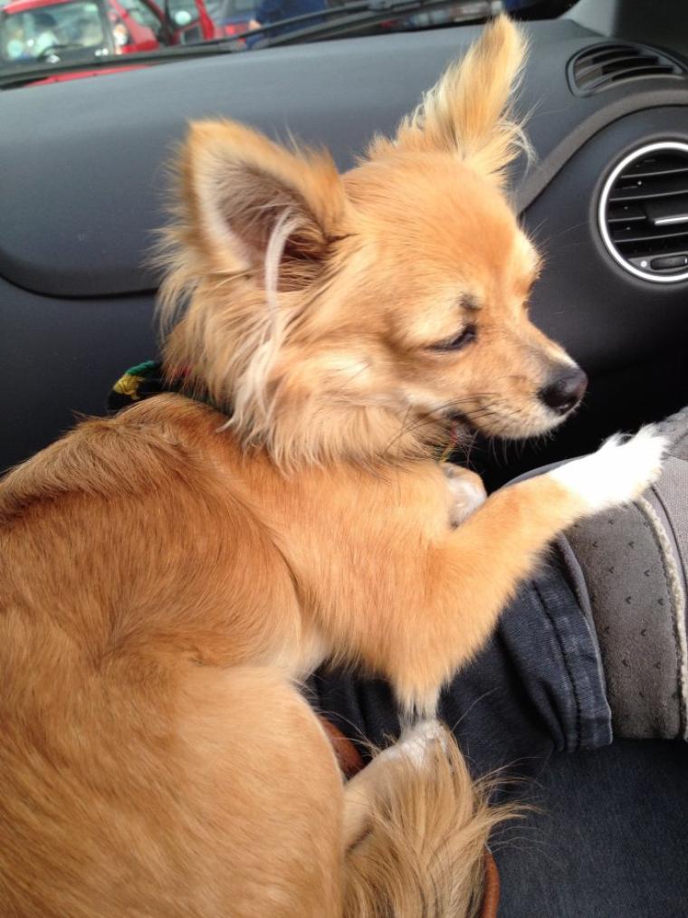 Iron en mode j'attend dans la voiture avec Maman que mamie finisse ses courses :)