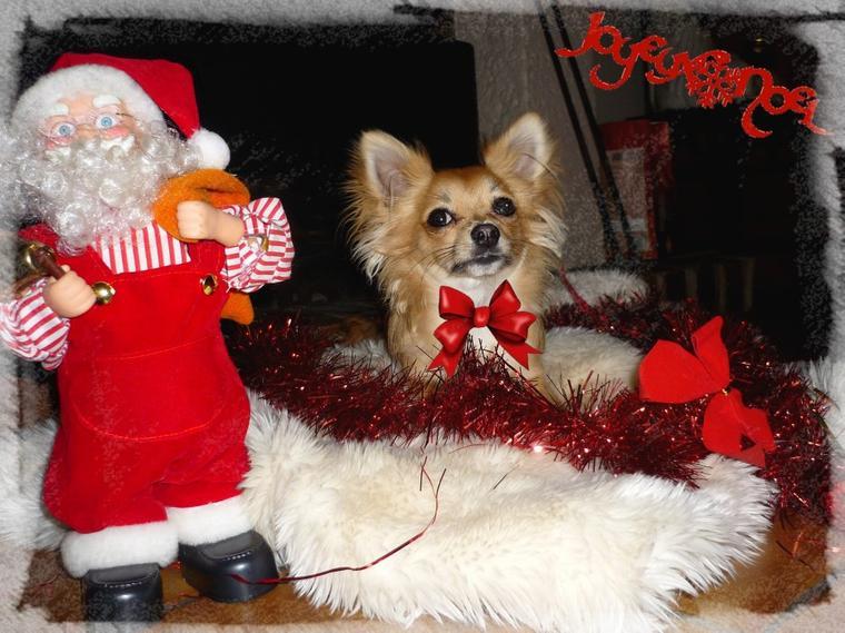 Nouveau concours photos : thème : féerie de Noel :D