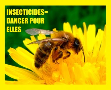 Protégeons les abeilles!