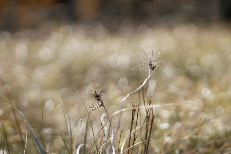 Je veux être libre comme le vent !