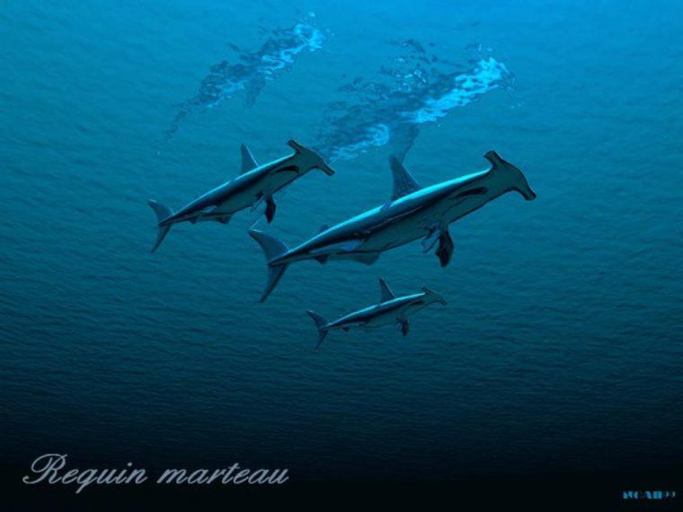 Aujourd'hui, des citations relatives aux océans ou à la mer.