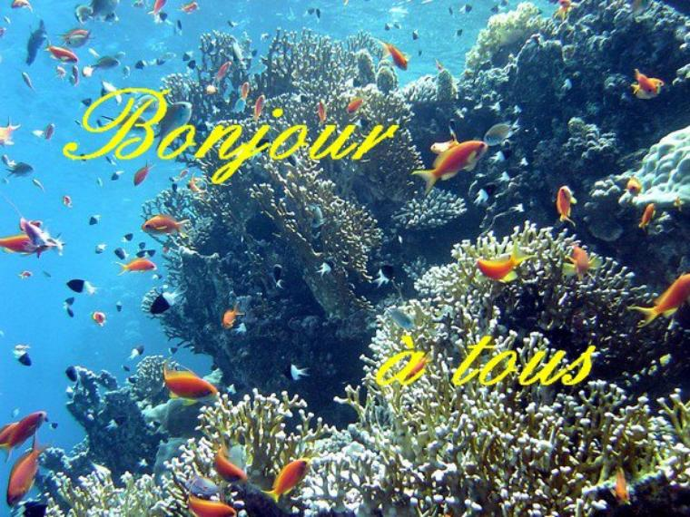 Bonjour à tous, aujourd'hui, des citations relatives aux océans ou à la mer.
