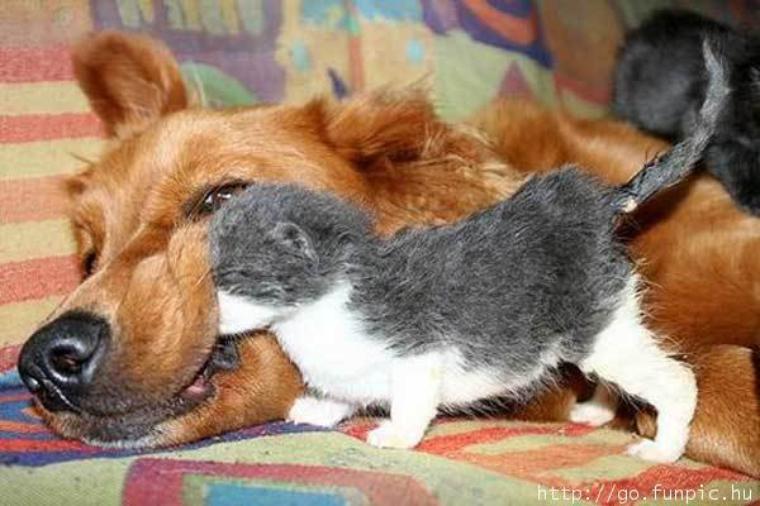 Histoire de chien : qu'est-ce qu'on est mieux à 2 !