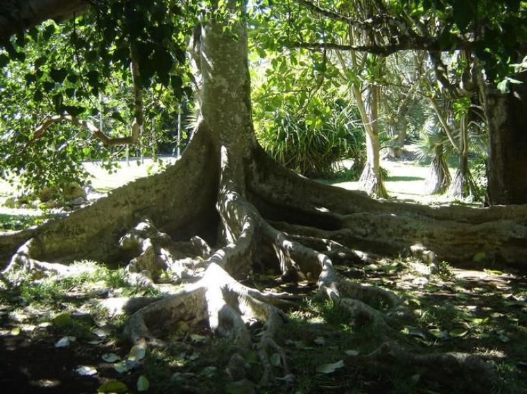 Aujourd'hui, quelques citations sur les arbres