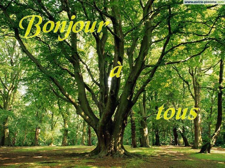Bonjour à tous, aujourd'hui, quelques citations sur les arbres