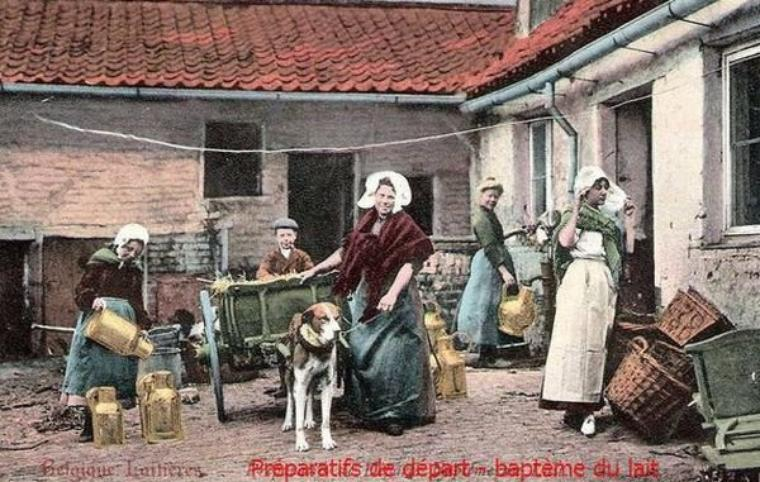 Aujourd'hui, une nouvelle série : les vieux métiers, voici pour aujourd'hui, les laitières belges