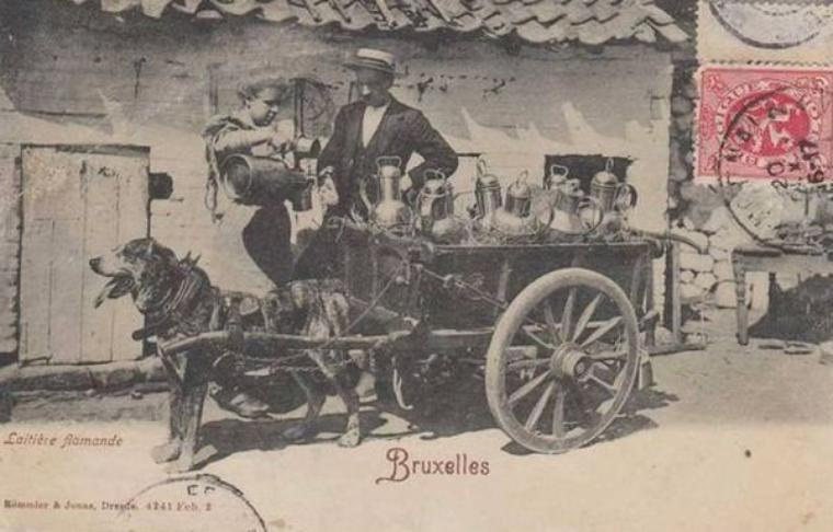 Aujourd'hui, une nouvelle série : les vieux métiers, voici pour aujourd'hui, les laitières bruxelloises