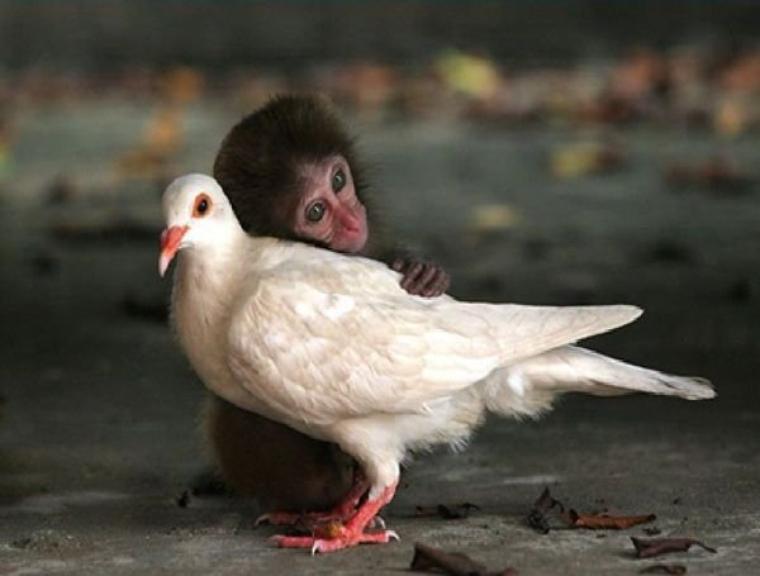photos attendrissantes empreintes d'amitié dont l'humain devrait s'inspirer