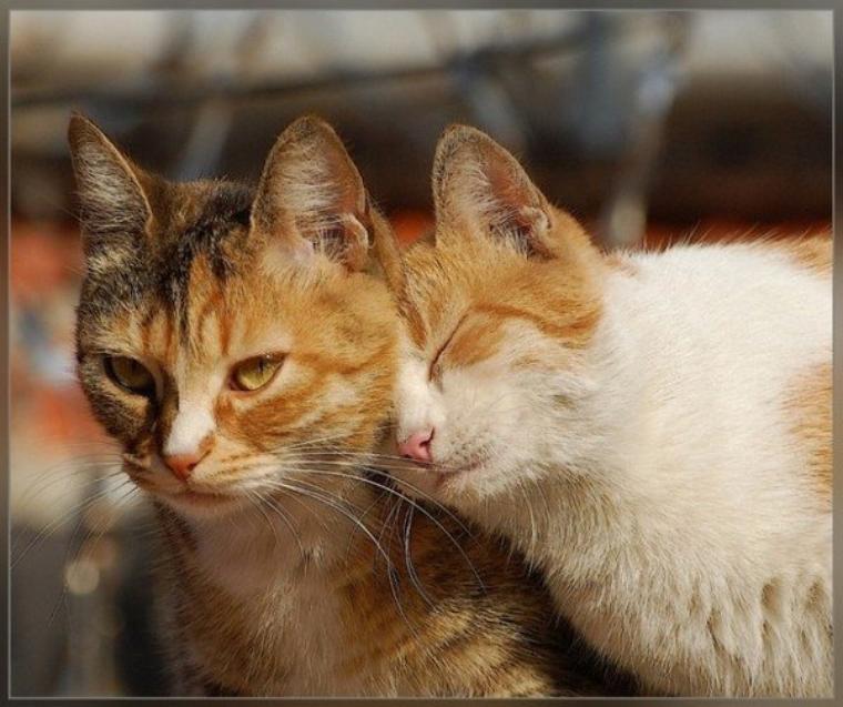 Aujourd'hui, quelques citations sur les chats accompagnées de jolis gis de chats et chatons