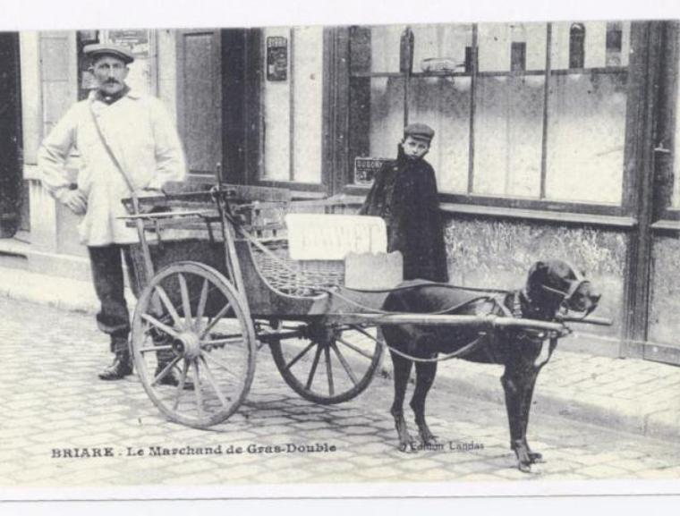 Aujourd'hui, dans la série des vieux métiers, encore quelques attelages mais cette fois des attelages de chiens en France et en Belgique.