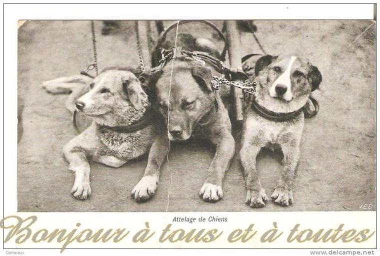 Bonjour à tous, aujourd'hui, dans la série des vieux métiers, encore quelques attelages mais cette fois des attelages de chiens de France et de Belgique.