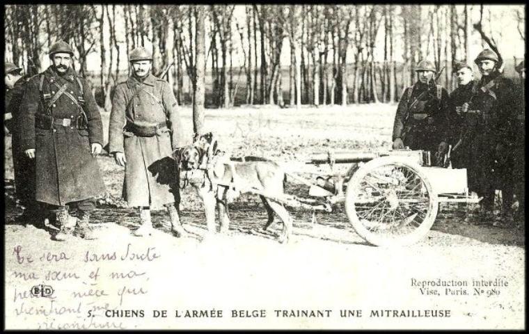 Attelage de chiens dans le domaine militaire