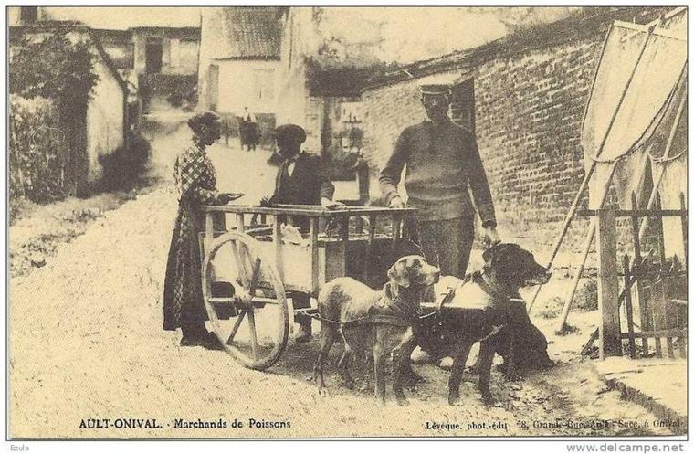 Aujourd'hui, voici encore d'autres attelages de chiens utilisés dans de nombreux petits métiers