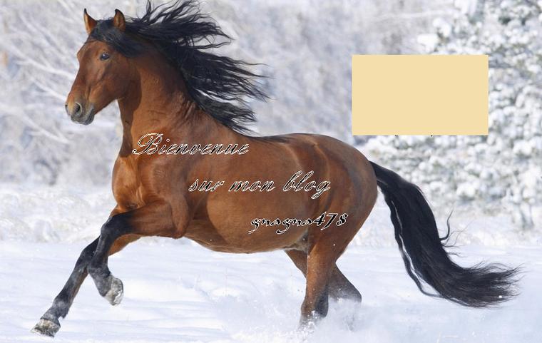 Bonjour à tous et à toutes, bienvenue sur mon blog, aujourd'hui encore consacré aux chevaux.