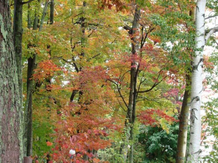 Aujourd'hui, en ce début d'automne, faisons la part belle à cette superbe saison et à sa faune, aujourd'hui, ce sera l'écureuil