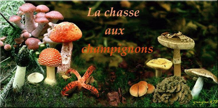 Bonjour à tous et à toutes, aujourd'hui, voici quelques citations pour agrémenter les gifs et les photos de champignons nombreux cet automne.