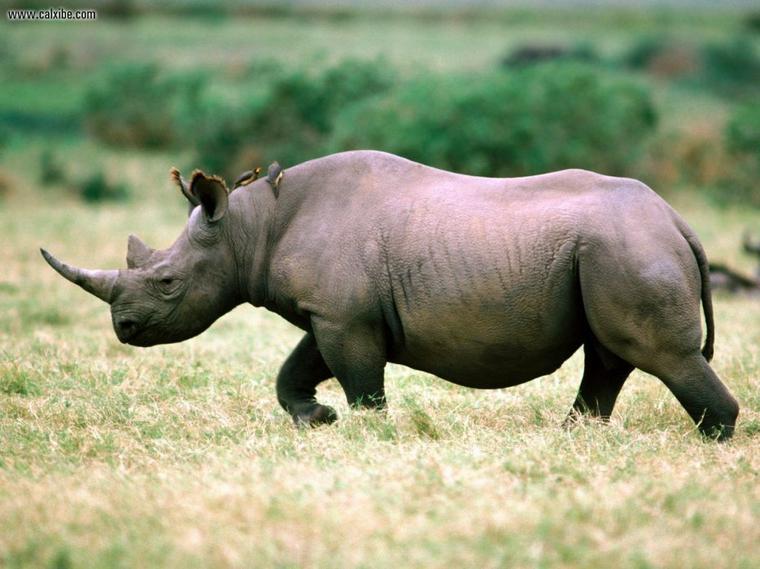 Aujourd'hui, c'est la journée mondiale des animaux.