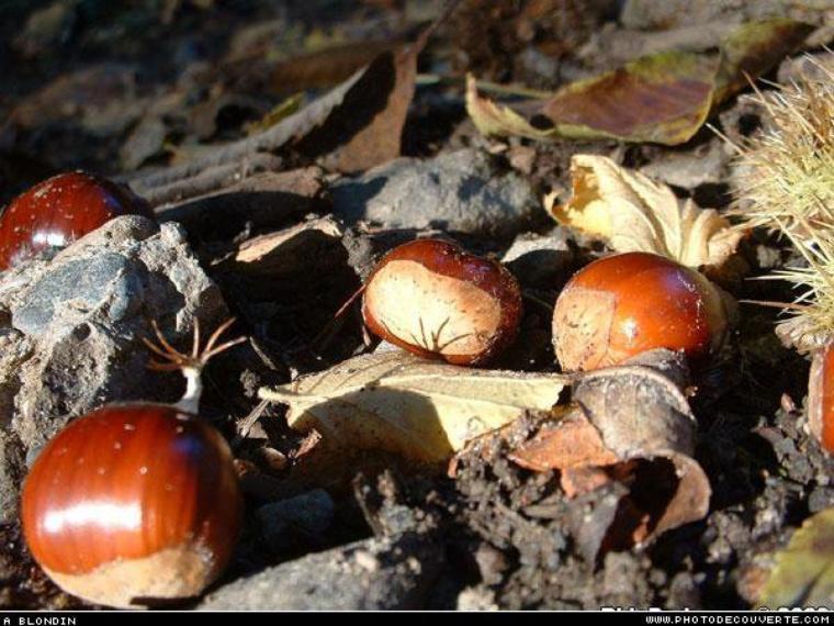 Aujourd'hui je vous propose une petite halte sur les délices de l'automne