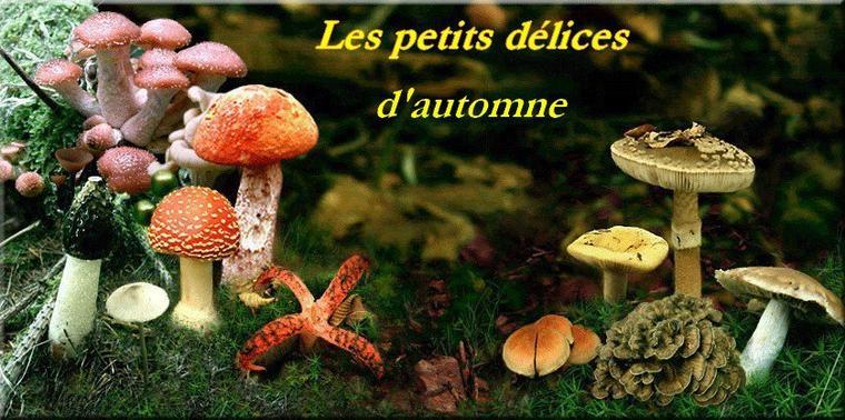 Bonjour à tous et à toutes, aujourd'hui je vous propose une petite halte sur les délices de l'automne