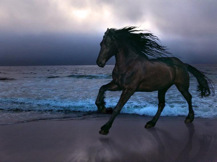 Aujourd'hui, voici quelques chevaux noirs, qui à jamais me rappellerons notre beau Favorito.