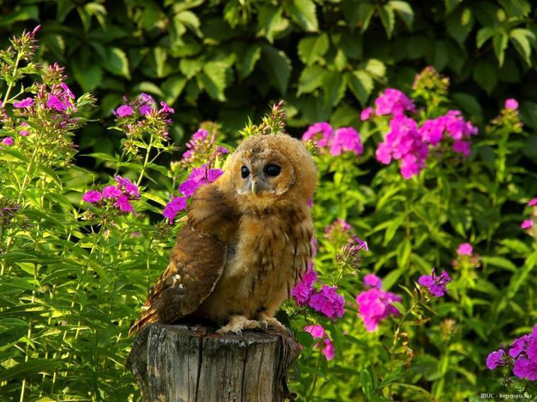 Aujourd'hui, voici quelques superbes photos de rapaces, oiseaux que j'admire le plus pour leurs performances dans tous les domaines. Je les trouve fascinants.