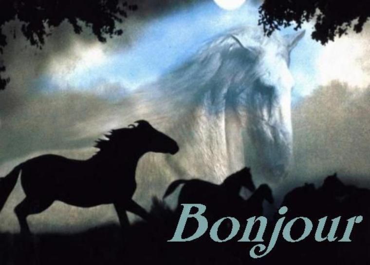 Bonjour à tous et à toutes, simplement une énorme envie de l'évoquer en photos par de beaux chevaux noirs - Tu nous manques tellement Favo -