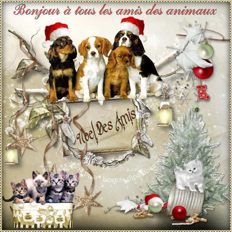 Bonjour à tous et à toutes, tout comme les jours précédents, je partage avec vous les gifs de Noël mais aujourd'hui j'aimerais les consacrer à nos chers animaux de compagnie ou autres. Je vous envoie mille bisous.