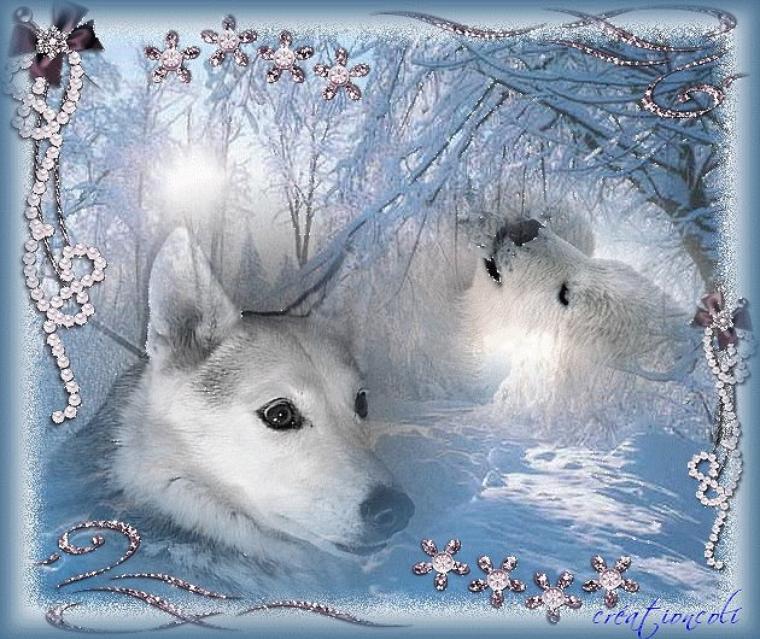 Bonjour à tous et à toutes, c'est avec toute mon amitié je vous souhaite une excellente journée ce jeudi.