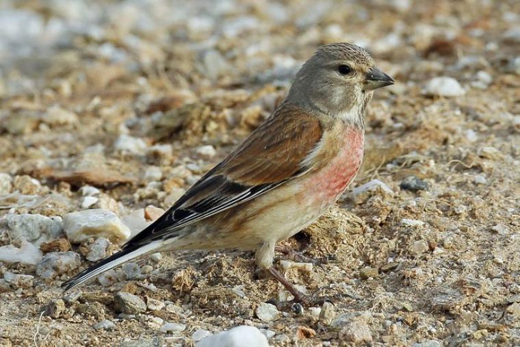 Bonjour à tous et à toutes, aujourd'hui j'ai choisi le thème des oiseaux de chez nous. Je vous souhaite une bonne visite de mon blog.
