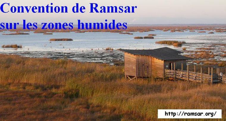 Journée mondiale des zones humides organisée en Belgique le 5 février au lieu du 2