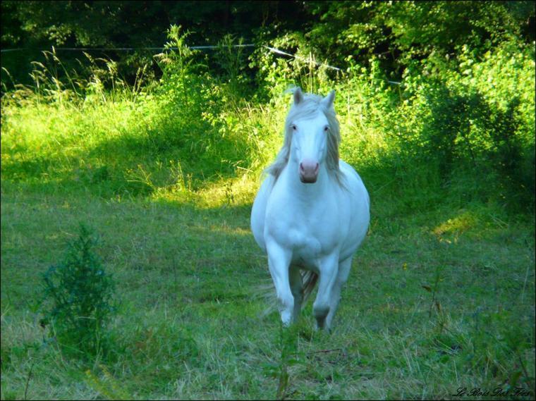 Propose 2 chevaux à travailler et monter gratuitement dans le 17