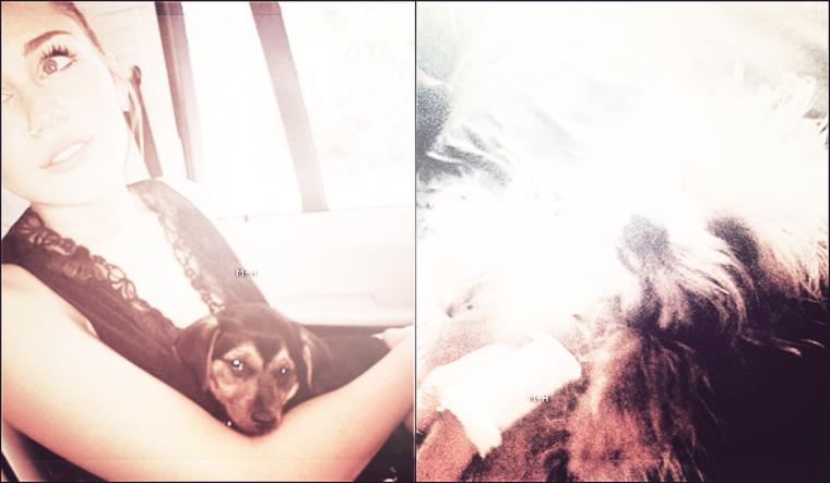 Miley a adopté un nouveau chien abbandonné : Happy ! Découvrez-le sur ces photos.