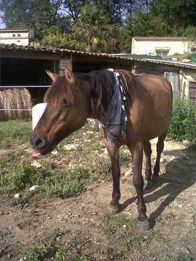 ♥xXmes amour de poneyXx♥
