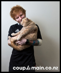 Cat-erview d'Ed Sheeran