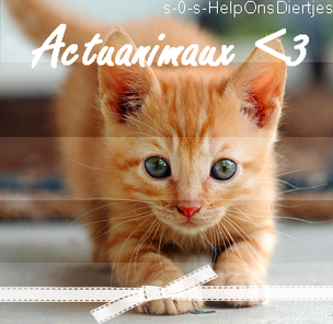 Article o6 →Actuanimaux