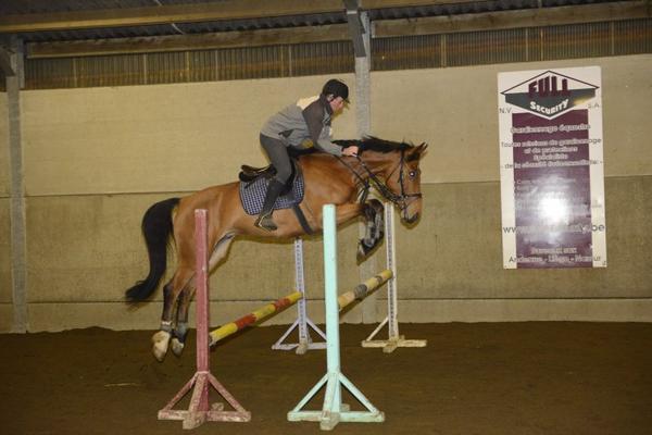Vole cheval, vole!