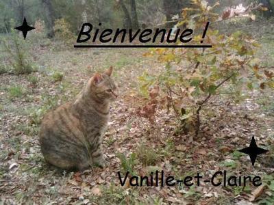 Bienvenue sur Vanille & Claire