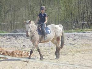 * Le tout n'est pas de parler au chevaux, mais aussi de savoir les écouter*  ♥