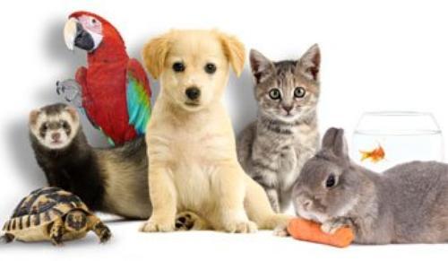 Pour retrouver un animal et le protégé
