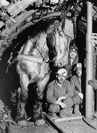 Un cheval qui travail dans une mine.