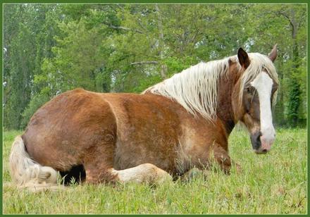 Un cheval dans le prés.