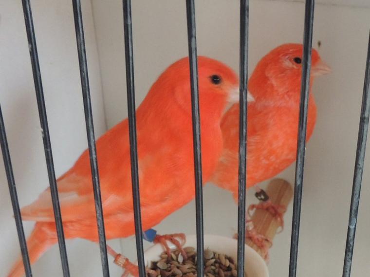 Des oiseaux de ce week-end