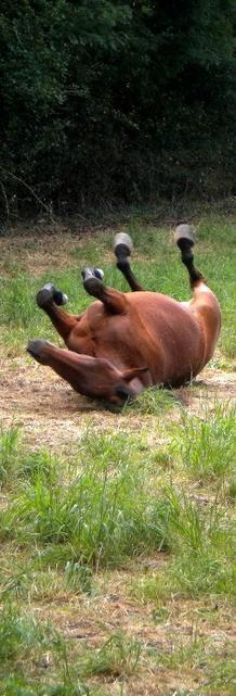 """""""Le cheval idéal n'est pas le cheval parfait, c'est juste celui dont on n'aime tout, même ses défauts."""""""