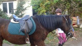 Photos des poneys du club...