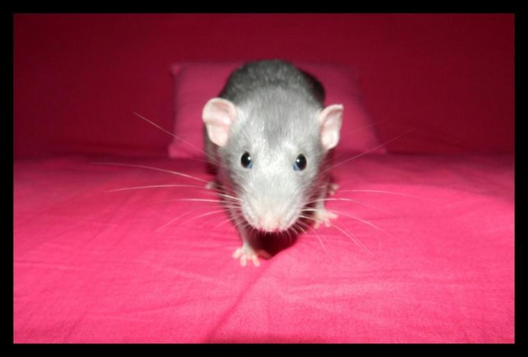 Et encore un ratou ! ♥