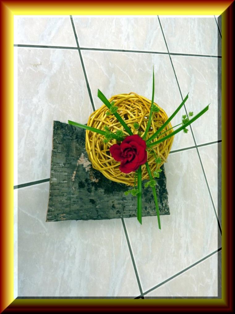 Une seule rose dans le jardin
