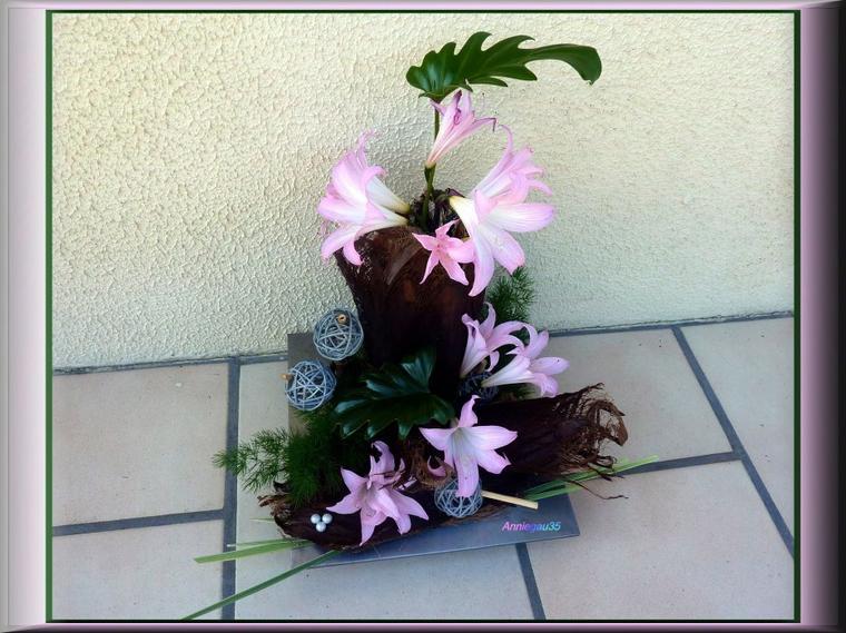 Lys belladona du jardin et  écorce de palmier qui à gelé cet hiver