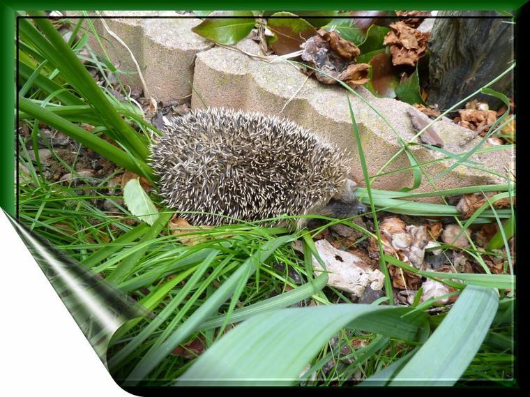 Un invité surprise au jardin cet après-midi