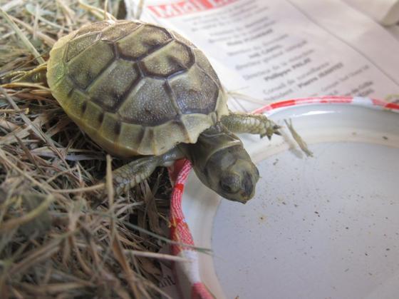 Présentation de La tortue qui est partie . HOMMAGES .