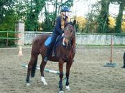Poppy ... Un cheval de coeur ♥